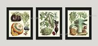 Unframed French Vegetables Print Wall Art Set of 3 Antique Kitchen Home Decor