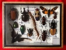 REAL 13 INSECT CENTIPEDE DISPLAY TAXIDERMY ENTOMOLOGY CICADA BEETLE INSECTS