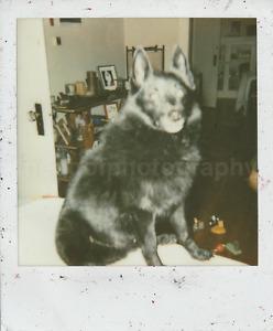 DOG CLOSE UP Vintage POLAROID Found Photograph FREE SHIPPING Original COLOR 7820