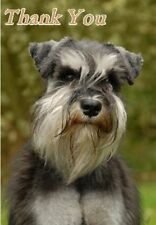 Miniature Schnauzer Thank You Card By Starprint