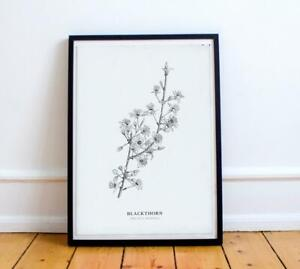 Botanical black and white print- Blackthorn blossom.