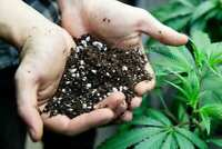 "4 Quarts Best Cannabis Potting Soil Secret Recipe ""The Dirt Of Buddha"" Marijuana"