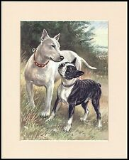ENGLISH BULL AND BOSTON TERRIER CHARMING DOG PRINT MOUNTED READY TO FRAME