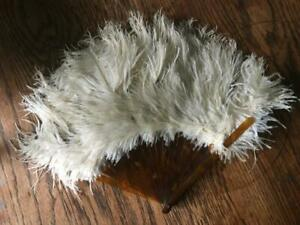Antique  Victorian Hand Fan; Ostrich Feathers with Tortoise shell ribs