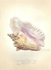 Ocean QUEEN CONCH SEASHELL original limted edition SIGNED handworked LARGE print