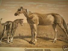 Antique Litho Lithograph Print Sibiu Sedmigradsky Horse