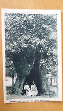 Cartolina Postcard CAMALDOLI (AR) un gigante della foresta  Non viaggiata