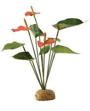 EXO Terra PT2992 Bodenpflanzen Flamingoblume