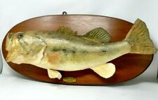 Vintage Real Skin 22 Inches Large Mouth Bass Taxidermy Fish Mount