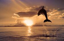 VLIES Fototapete-DELPHIN SUNSET-(920V)-Unterwasser Meer Küste Tiere Natur Wand