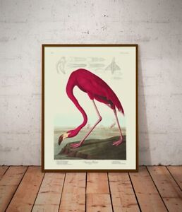 various sizes Flamingo Natural History print