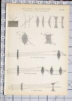 1886 Stampa Naturale Filosofia Rifrazione Di Luce Telescopi Vari Diagrammi