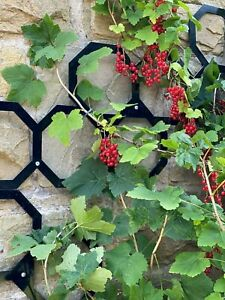Garden hexagon metal trellis panels. Climbing plant fence support framework