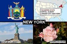SOUVENIR FRIDGE MAGNET of THE STATE OF NEW YORK USA