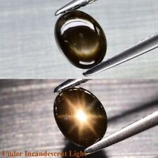 Rare! 1.19ct 7.2x5.5mm Oval Cab Natural Unheated Black 12 Ray Star Sapphire