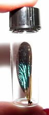 REAL BLACK GREEN DRAGONFLY FAIRY WING PRESERVED IN GLASS VIAL