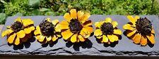 Painted Pine cone daisy Zinnia Flowers Zinnia Pine cones Yellow daisy Set of 3