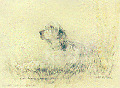 English Setter Limited Edition Print by Uk Artist Gill Evans Matted