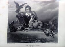 "FALCO, acciaio 1862, ornitologia."" THE CHIEFTAIN'S FRIENDS"""