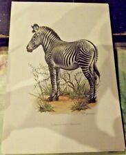 N°137 Mammal Poster the Grevy Zebra