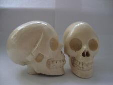 walking stick handle/skull