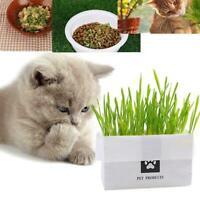 Haustier Katze Gras Soilless Culture Growing Kit Katzen Hairball Magen Cont C2D6
