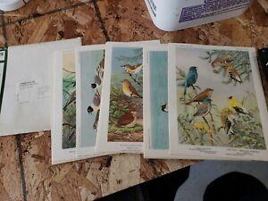 Bird Portraits In Color General Mills 1960s