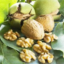 1Pcs Walnuts Tree Seed  Rare Bonsai Organic Perennial Plant For Home Delicious