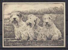 1938 UK Dog Art Etching Ardath Large Cigarette Trade Card SEALYHAM TERRIER VG+