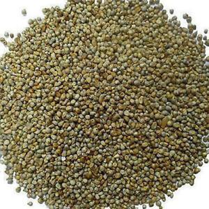 Bajra Grain Kambhu Pearl Millet Whole Grain Freshly Pack Bajara -FREE SHIP-500gm