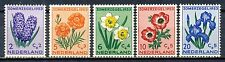 NETHERLANDS - CULTURAL & SOCIAL RELIEF FUND - FLOWERS 1953 MNH        Hk416d