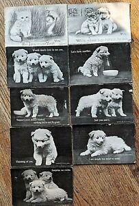 9 Antique 1911 etc white dog puppy postcards Plainview NE Nebraska Pups