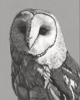 Fine Art Print of Original Ink drawing Barn owl animal 8X10''