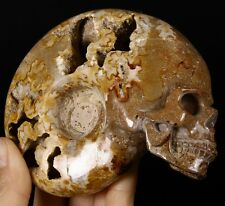 CHAMBER AMMONITE FOSSIL Carved Crystal Skull, Realistic, Crystal Healing, #440