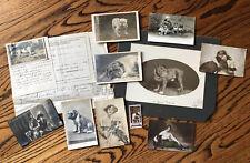 Historical Dog 1915 Documents American Kennel Bulldog Photograph Rodney Rosador