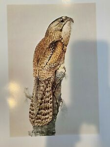 "Louis Agassiz Fuertes & The Singular Beauty of Birds, ""Common Potoo"" Print"