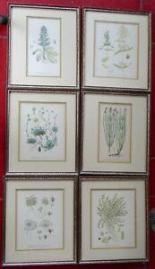 6 Vintage Antique Swedish (?) Botanical Framed Litho Prints