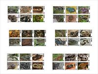 2010 SNAKES REPTILES 6 SOUVENIR SHEETS MNH IMPERFORATED