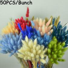 Props Dried Flowers Bouquets Rabbit Tail Grass Lagurus Ovatus Bunny Tails