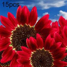 15Pcs Red Sunflower Seeds Helianthus Flower Home Garden Bonsai Decoration Plant