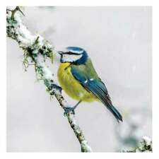 Blue Tit in the Snow Christmas Cards Pack of 8 Cards Charity SongBird Survival