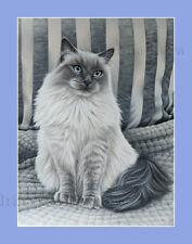 Ragdoll Cat Perla Gris Impresión por I garmashova