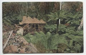 TASMANIA c.1908: used card by VALENTINE w/view titled FERNLAND (251)
