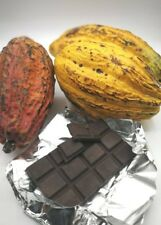 DRIED COCOA BEAN ORGANIC CHOCOLATE FROM NATURAL 100% THAILAND 100G FREE SHIP