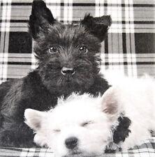 Deko Wandbild Westie Hund Welpe West Highland White Terrier Bild Geschenkidee