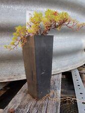1 x orange peel thyme Thymus nitidus perennial herb plant tube size