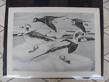 Original 1930  Rex Brasher#154  Hand Painted Bird Print  Old Squaw  #154REX2 DSS