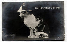 Vintage REAL PHOTO postcard 1906 Cat Dressed/Military Attire COMMANDER/ROTOGRAPH