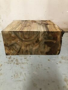Ambrosia Maple Bowl Blank/turning Wood (7223)