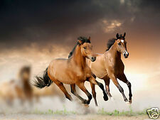 Brown Horse Stalion Mustang #2 Wall RV Trailer Mural Decal Decals Graphics